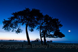 211 - Three trees in silhouette at night with moon light in the New Forest National Park, Hampshire, England