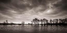 Flood meadow with trees, Dorset, England