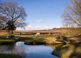 3228 - Ponies at Splash Bridge in the  New Forest National Park, Hampshire, England