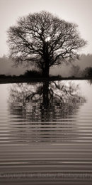 Lone tree and ripples in pond at sunrise in the New Forest National Park, Hampshire, England