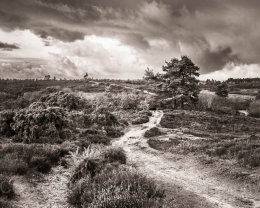 Dark clouds over the New Forest National Park, Hampshire, England