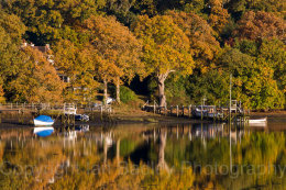 9740 - Beaulieu River trees in autumn, Hampshire, England