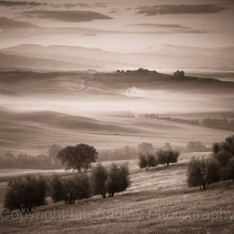 Trees and sunrise over the UNESCO Val d'Orcia, Italy