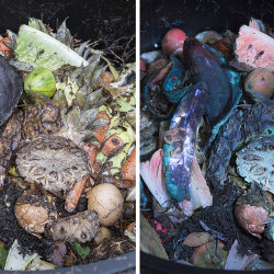 Compost heap at night in visible and UV fluorescence