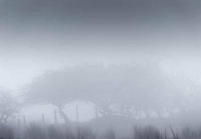 Antrim Mist
