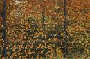 Burnt autumn Leaves