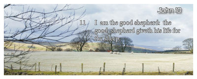 I am the good shepherd: