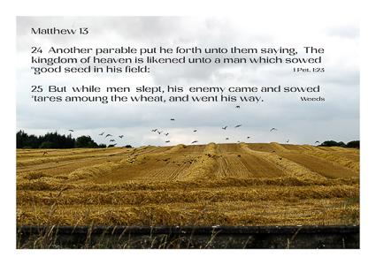 Matthew 13 v 24 v 25