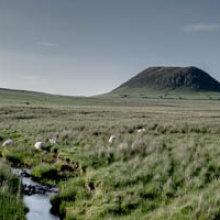 Slemish Mountain in Summer