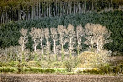 The Tree Line