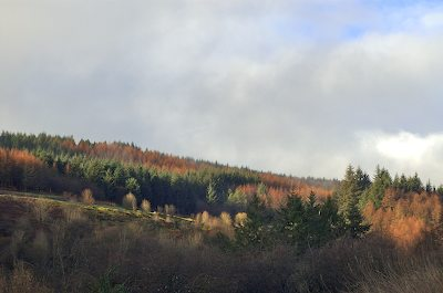 Winter Colours in Glenariff