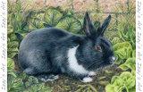 'Peter the Rabbit' Magnet