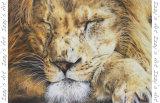 'Sleeping Lion' Magnet