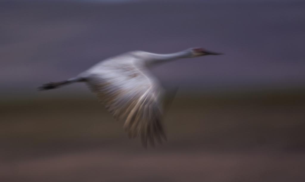 Mystical Crane