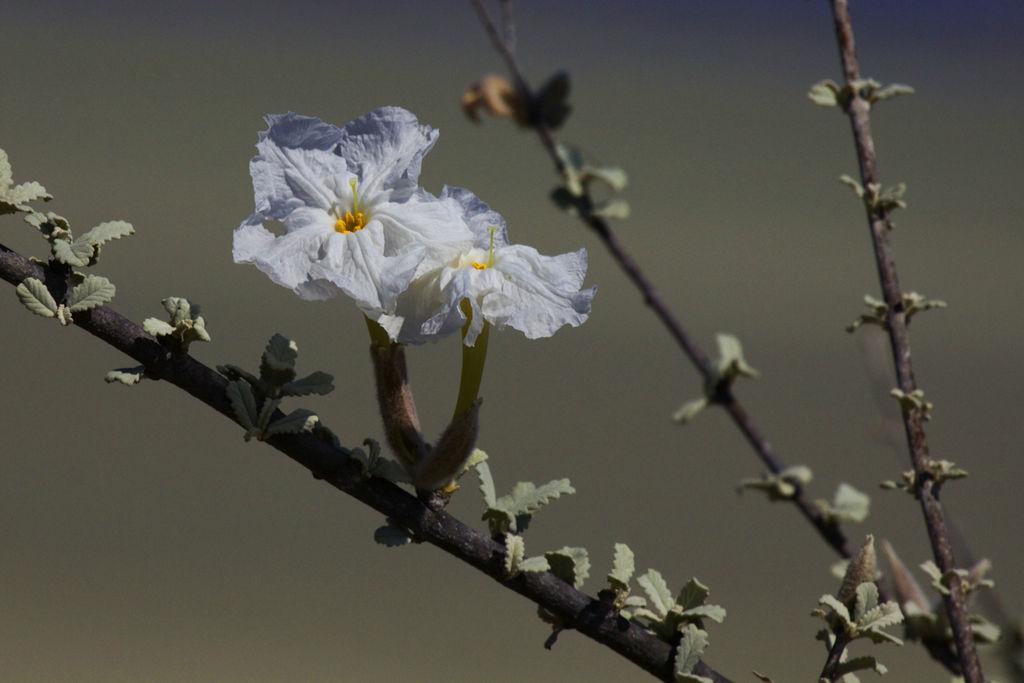 Unexpected Desert Flowers