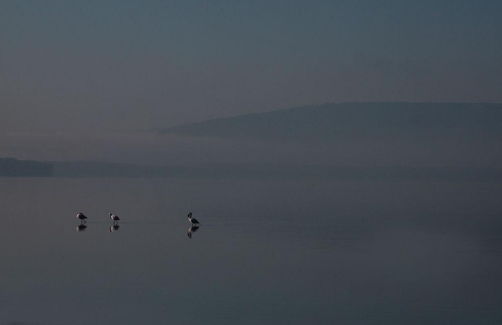 Lake Nakuru Kenya.