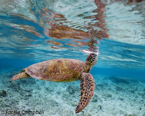 Turtle breath, Great Barrier Reef, Australia