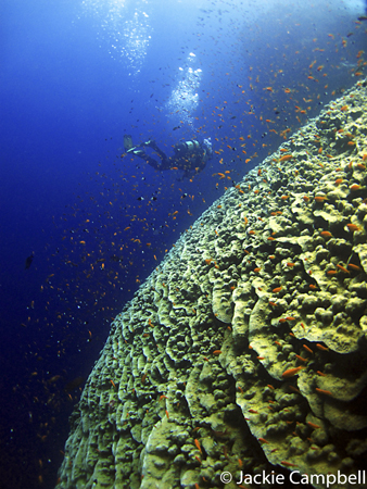 Reef Scene, Red Sea Egypt