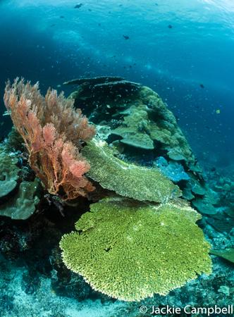 Reef Garden, Raja Ampat, Indonesia