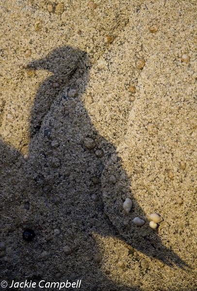 Seagul Shadow, Dublin, Ireland