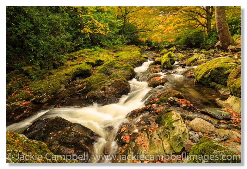 Autumn scene 1