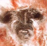 Marsh - The Terrier