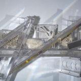 Rainbow Trusses (studio suggestions creatures IV), 2010