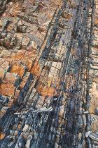 Hartland Rocks II