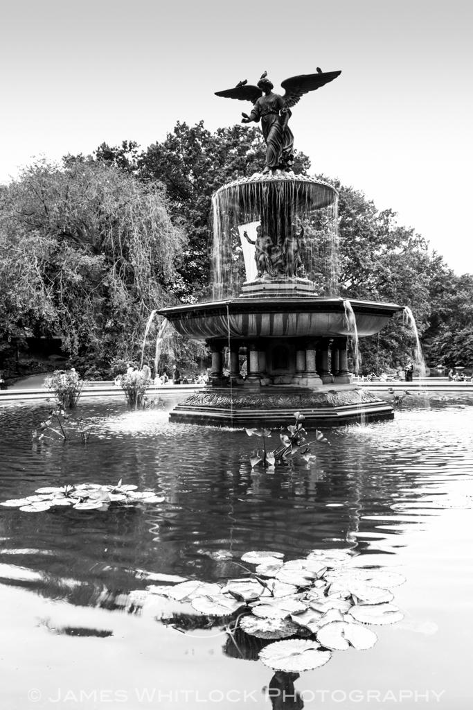 Black Central Park