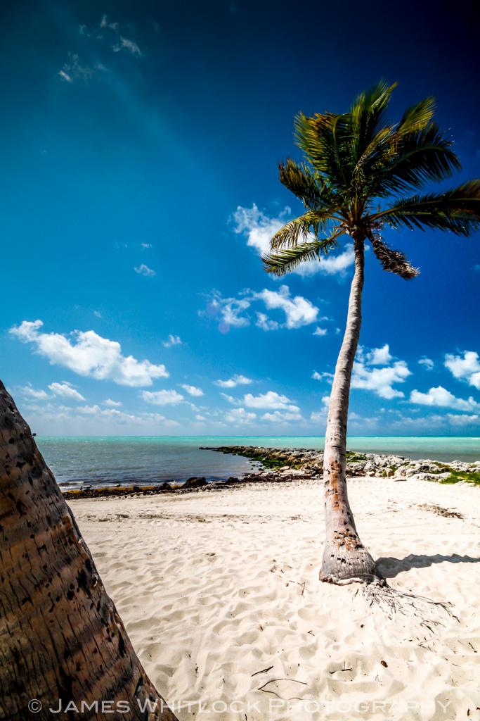 Key West Palm 2