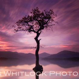 Loch Lomond Isolation Panorama
