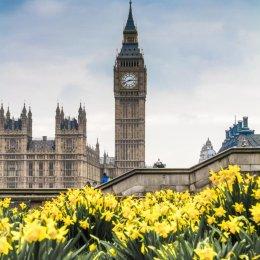 London in Bloom Portrait