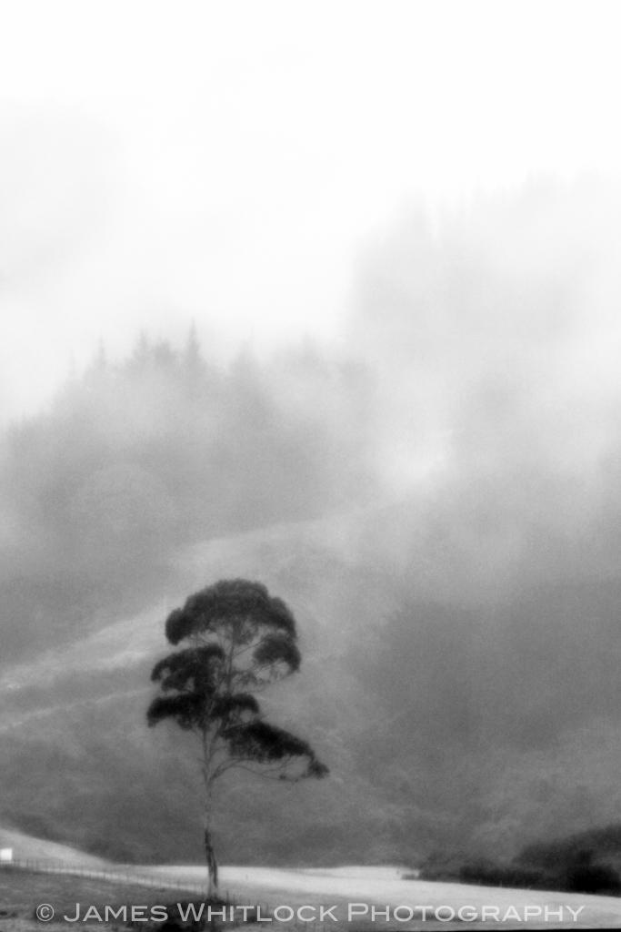 Pohara Tree