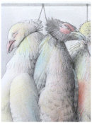 EARTHLINGS 11 - GAME BIRDS: THE SMALL VALUE OF LIFE & DEATH (DETAIL)