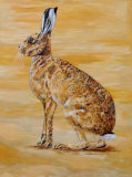 golden hare SOLD