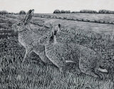 hares in the field
