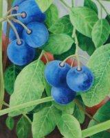 Detail of 'Blueberries'