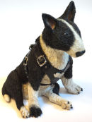 Bull Terrier With Harness