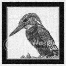 jwh BW kingfisher #1v3