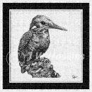 jwh BW kingfisher #2v3