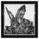 jwh BW long eared bat#1v3