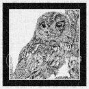 jwh BW tawny owl#1v3