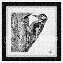 jwh BW woodpecker#1v3