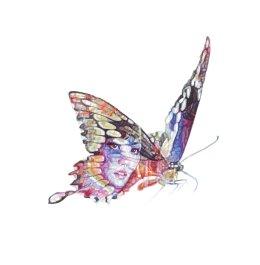 'Butterfly Lover Zhu Yintai', South China Tiger, 2014 Colour Biro Drawing