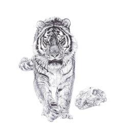 'Bang!', Siberian Tiger, 2013 Black Biro Drawing