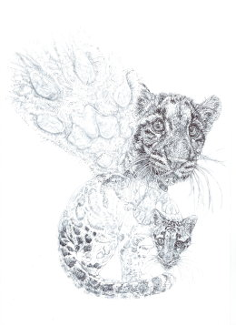 'Clouded Leopards' 2014 50 Limited Edition Signed and Numbered Prints for WCS Malaysia Program.  £35