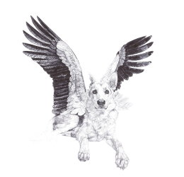 'Sweet', Grey Wolves,  2013 Black Biro Drawing