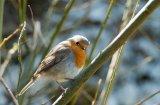 Robin at Elan Valley