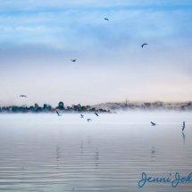 Stillness of the Morning 1