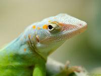 Lizard / Hagedis
